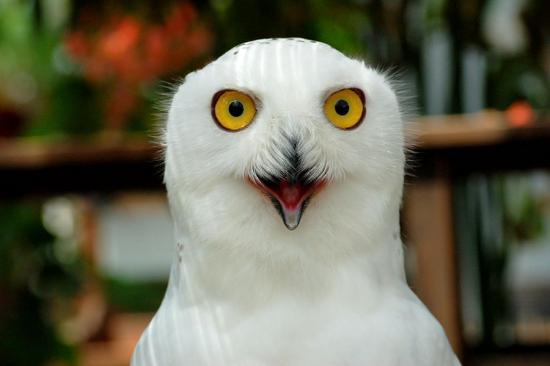 フクロウ8