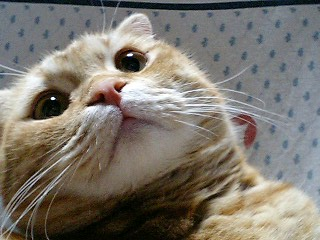 cat1210_1172946835.jpg