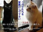 北九州SOS猫たちのお世話係