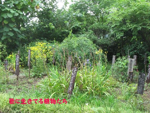 IMG_3217歌草